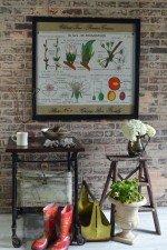 vintage botanical art - cherry tree educational poster window art