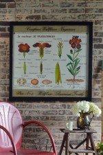 Vintage botanical framed art - Wallflower educational poster window art