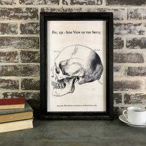 Vintage Skull artwork
